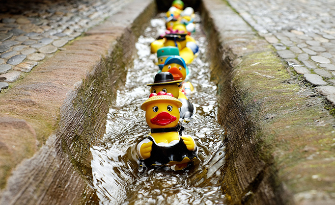 rubber ducks swimming down a channel