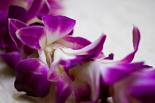 close-up image of orchid lei