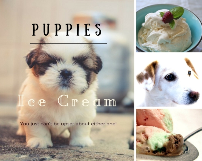 A collage of puppies and ice cream